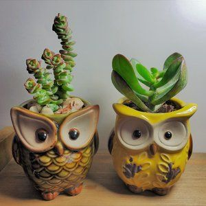 Other - Succulents in Ceramic Owl Planter, set of 2